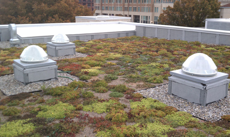 W---Renovation---New-Annex---Vegetated-Roof
